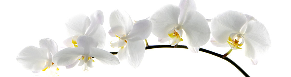 Orchid Acupuncture